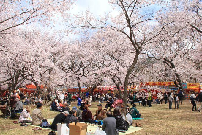 日本3大桜の名所でゆっくりお花見。敷物もあると便利です。