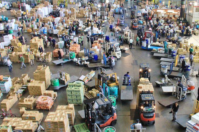 人や物が行き交う活気あふれる大田市場。巨大青果市場で社会科見学