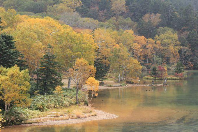 爽やかな高原の空気に包まれた池の畔でのんびりと