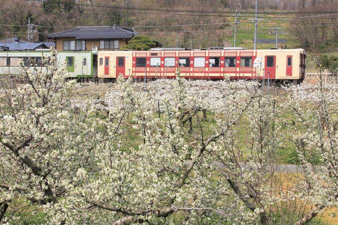 果樹畑と車両を撮影するなら三才〜豊野間がお勧め!