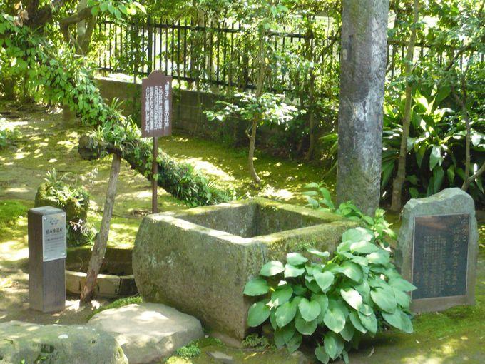 子供にも恵まれ、鏡子夫人も気に入っていた坪井旧居へ