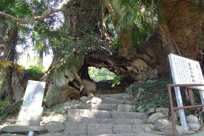 生樹(いきき)の御門をくぐり長寿祈願?!大山祇神社の奥の院へ