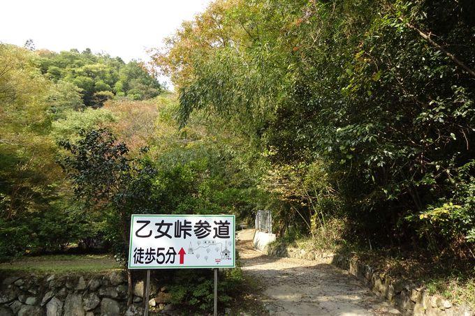 桜の名所でもある乙女峠へ軽くトラッキング