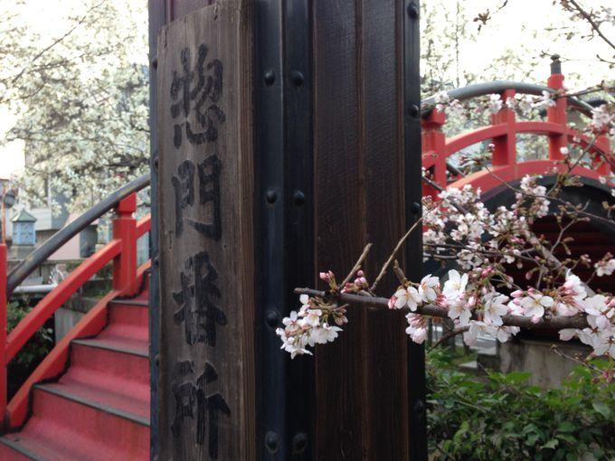 惣門番所は、福山城の北の守り門?!・・こぶしに交じって桜も