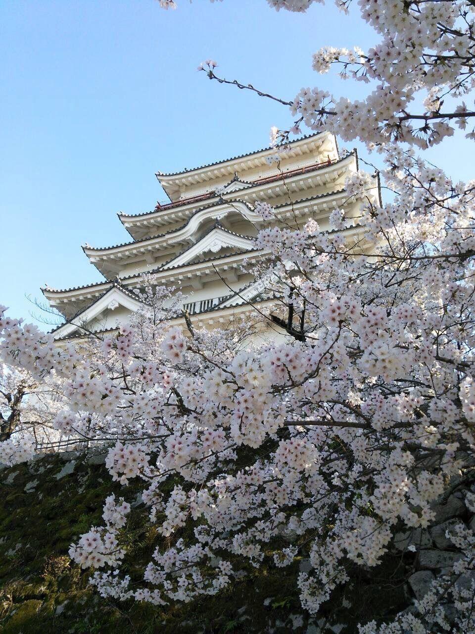 『流星ワゴン』でもロケ地になった勝成公の福山城で桜見学