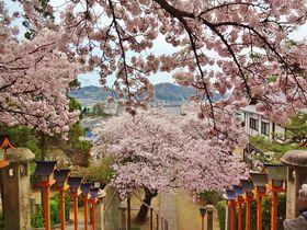 尾道散策なら西國寺で健脚祈願を!〜桜も見事な名刹へ颯爽と