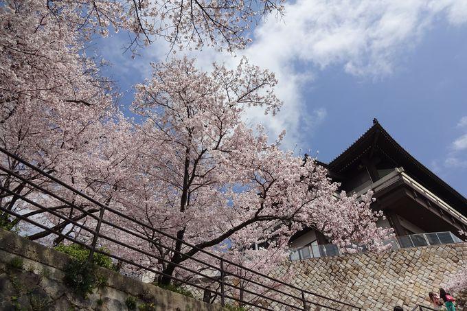 建築物としても素晴らしい「尾道市立美術館」と桜
