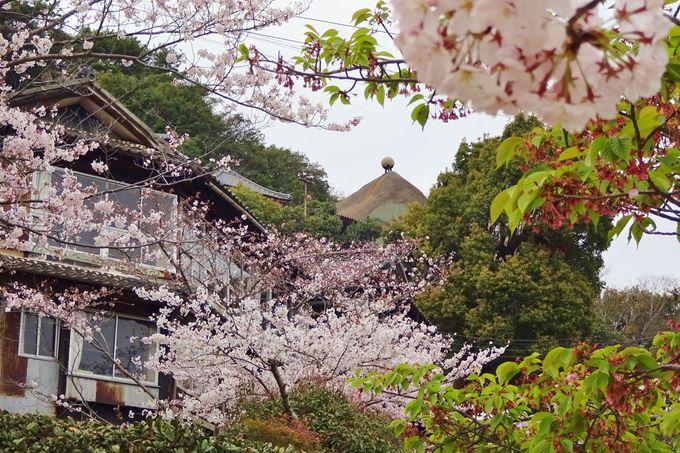 千光寺の素晴らしさは、下から見ても上から見ても絶景ってこと