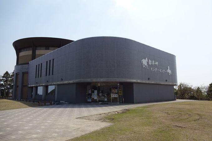 野生馬ガイドは「都井岬ビジターセンター(うまの館)」で
