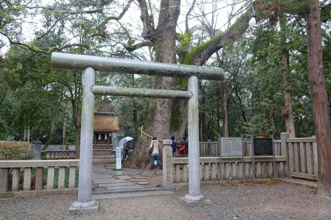 夫婦神を祀る日本最古の神社・伊弉諾神宮で大楠のパワーに触れる