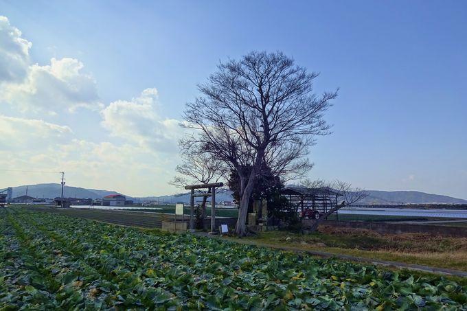 「葦原国」と呼ばれた淡路島、まさに始まりの地