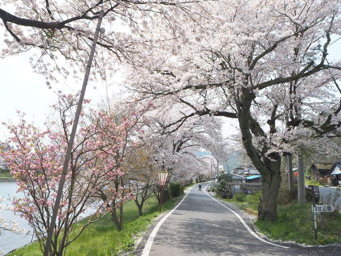 三刀屋城址への細い登り道〜古城の風情と桜のコラボ