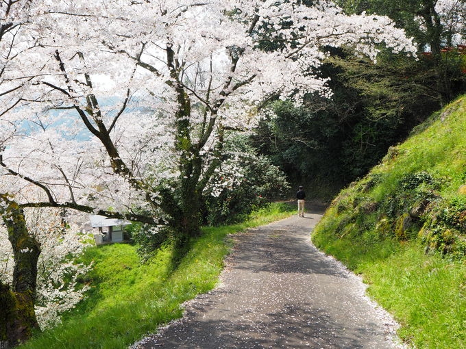 三刀屋城址の色鮮やかな桜〜古城の面影もそこかしこに
