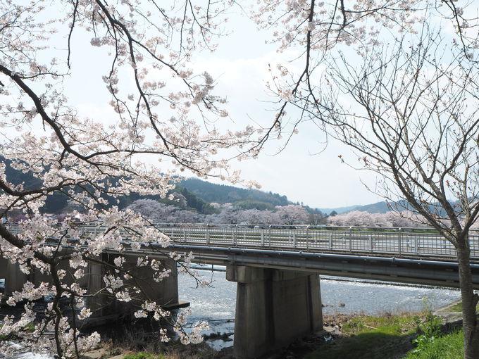 春の陽光でぽかぽか気分〜橋を渡って向こう岸散策も