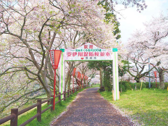 さあ!桜のトンネルを歩いてしばし桜の花園へ