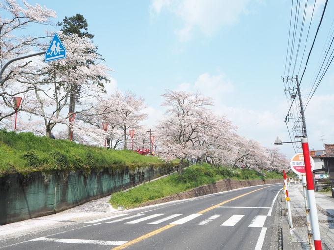 斐伊川はヤマタノオロチ伝説の地!今は桜がこの川を彩る