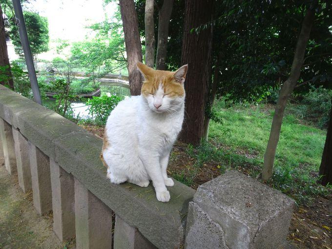神社には4匹の猫! 「猫みくじ」もある