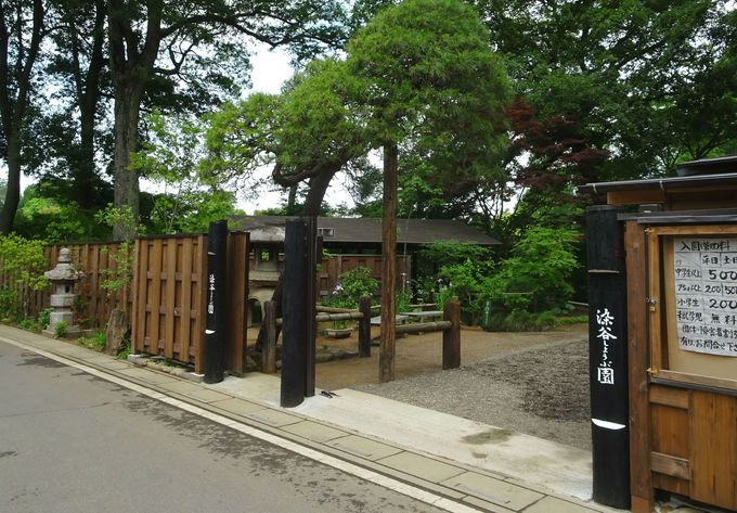 30年以上の歴史をもつ植物園「染谷花しょうぶ園」