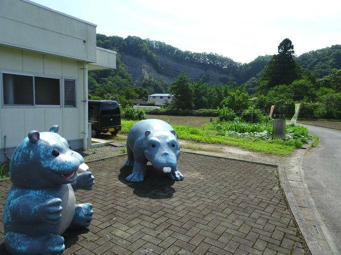 """国指定天然記念物""""ようばけ""""がすぐそば! 「おがの化石館」"""