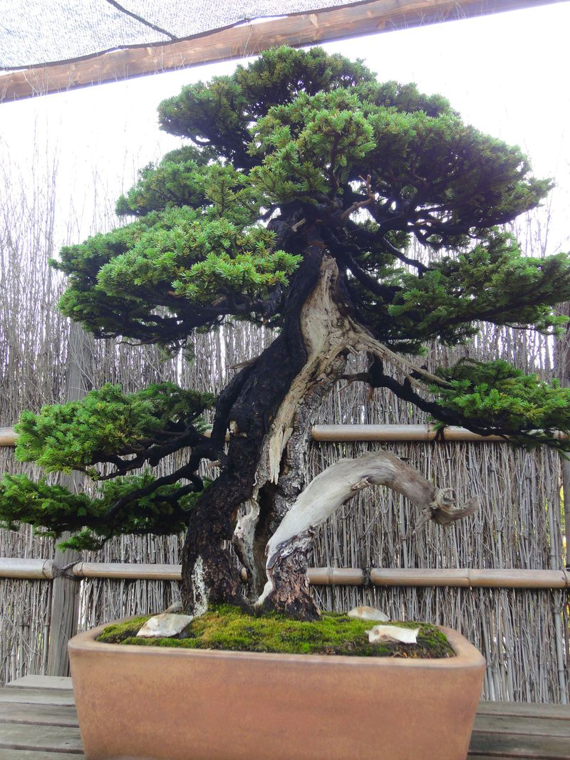 世界中のセレブが注目『Bonsai』大宮盆栽村で盆栽・漫画・スイーツを欲張りに!