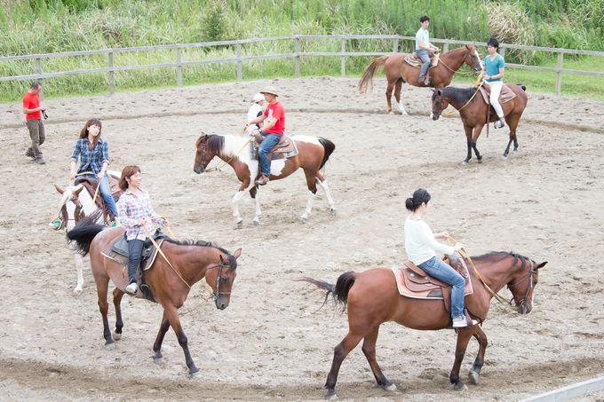 馬場で30分間の乗馬レッスン