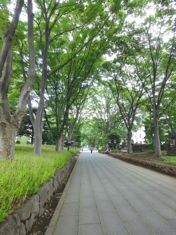 2キロの長さがある氷川参道!