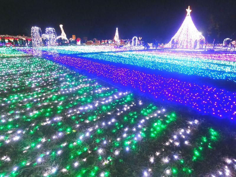 東武動物公園のイルミネーションは音と光のリズミネーション!