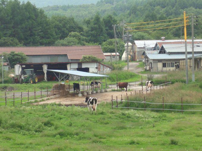 東京ドーム45個分の広大な牧場を眺める