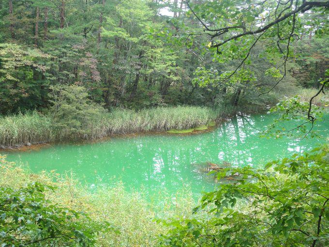 「赤沼」というけど…水の色は赤じゃない!?