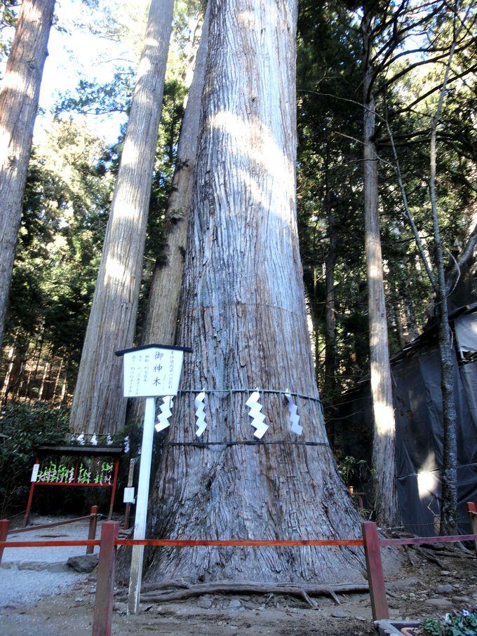 必見NO.4:樹齢約700年!境内で一番巨木の「ご神木」