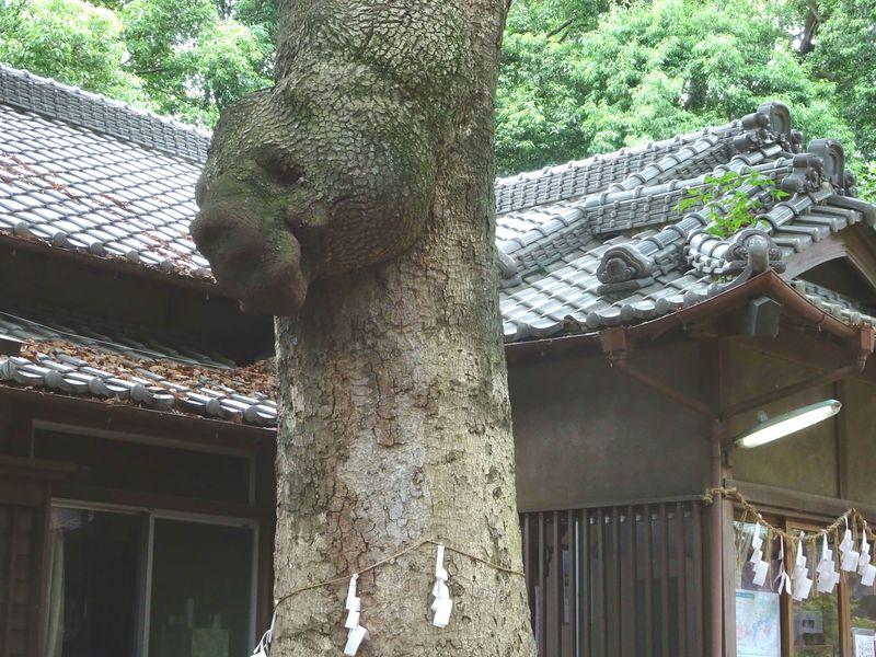 熊のご神木…!?竜神パワーもすごい!埼玉「氷川女体神社」