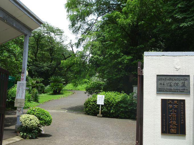 植物好きにははずせない観光スポット「小石川植物園」