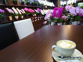 高田純次も訪れた東京・小石川の新名所!胡蝶蘭カフェ「らんや小石川」