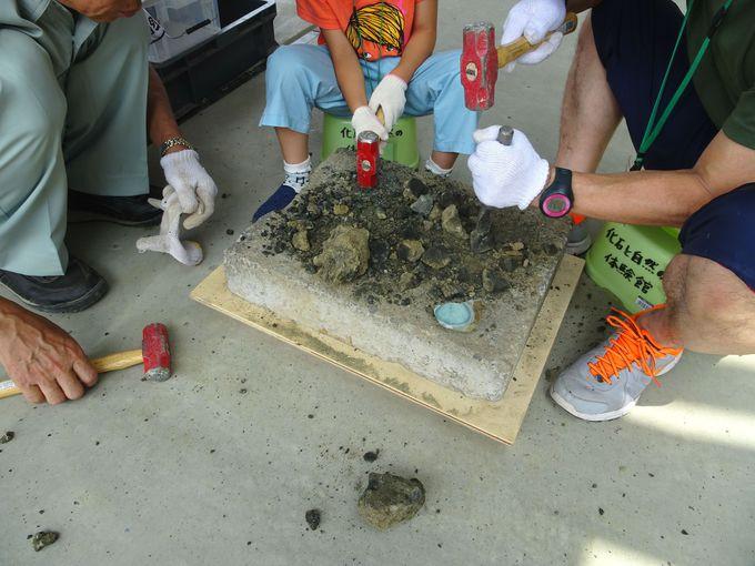 ハンマー、タガネで岩塊を割って、化石を発掘