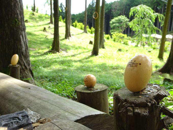 ポイント3:「kicoro(キコロ)の森」を散策しよう!