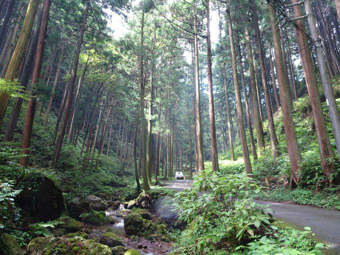 ポイント1:黒山三滝までの道…神秘的な森の中を歩こう