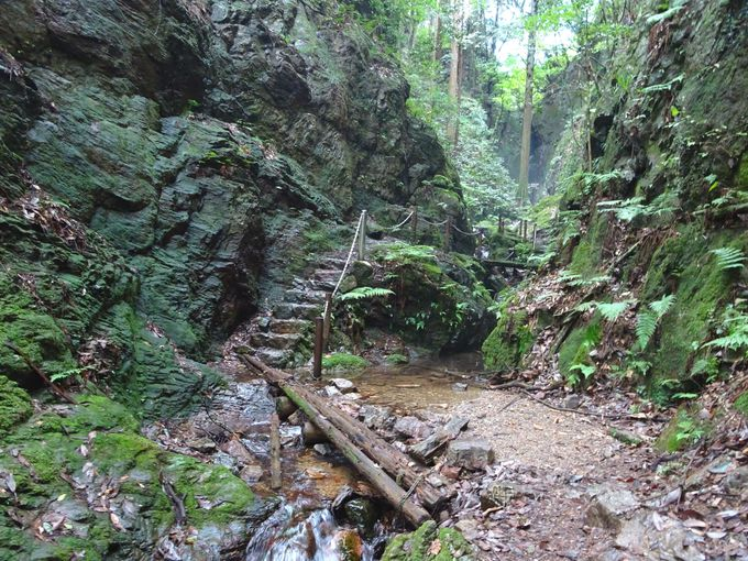 ポイント2:黒山三滝の一つ・天狗滝を見に行こう