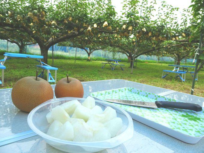 梨の木の下で、梨を食べられるのも味わい深い!
