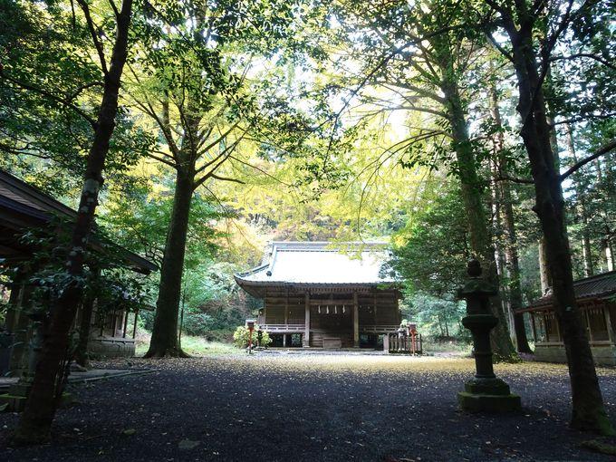 森の中にある荘厳な社殿