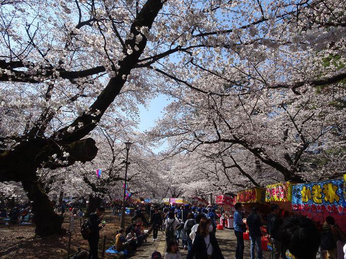 毎年開催!多くの人でにぎわう「大宮さくら祭り」