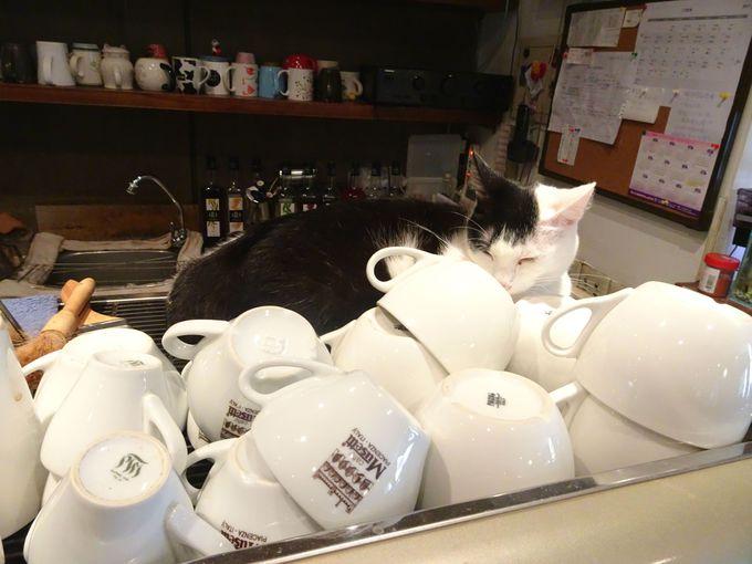 店内でくつろぐ猫たちを愛でよう!