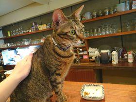 台北屈指の人気!猫カフェ「極簡cafe」は癒しのネコネコワールド