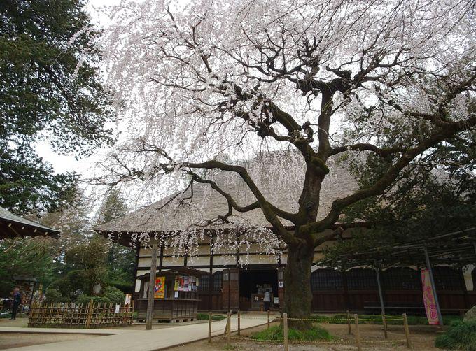 たぬきポイント1:参道に立ち並ぶ22体のタヌキ像がお出迎え!