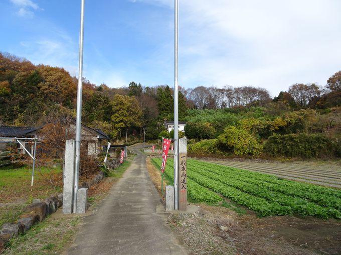 ポイント2:神社は山の上に鎮座。山も聖地なのでいい気を感じながら登って!