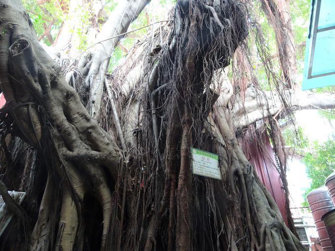 必見!パワーを強く感じる…龍神さまが宿る木