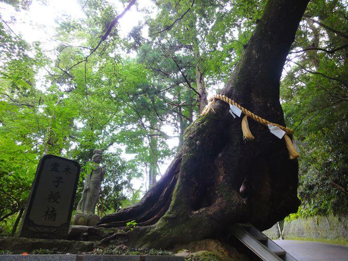 霊木「子授楠」…神仏が宿っています!