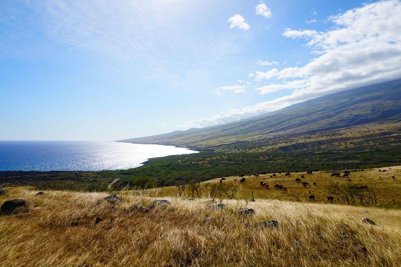 知られざる世界へ!マウイ島「天国のハナ」を1周しよう