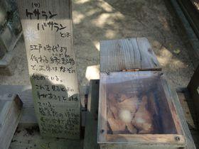 幸運を呼ぶ!?ケサラン・パサランが見られる姫路市立動物園