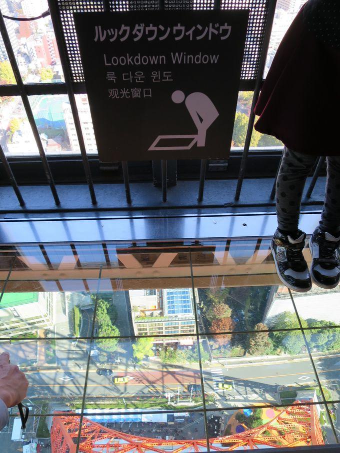 東京観光のシンボル『東京タワー』へ。ガラス張り床でお尻がギュッ!