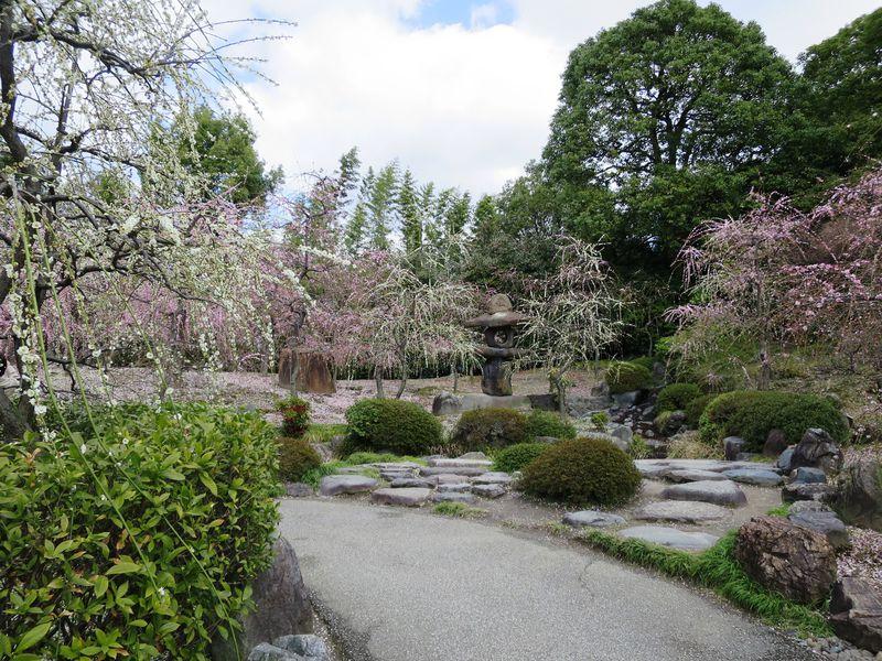 しだれ梅と椿まつり!京都・城南宮『梅が枝 巫女神楽』も必見!